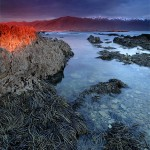 Stills_Photo_Tours-David_Still-New_Zealand-Seaweed-0728