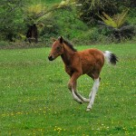 Stills_Photo_Tours-AU - Foal
