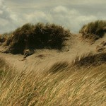 Stills_Photo_Tours-CB - Windy sandhills
